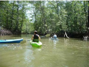 Kayak mangroves quepos