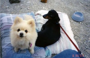 Heidi and Fritzie relaxing at a campground